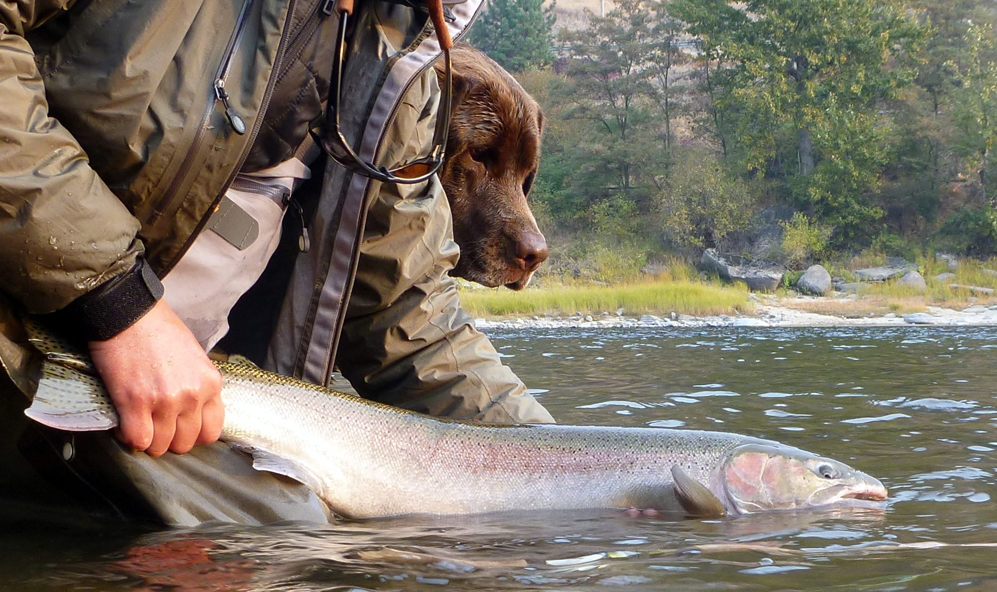 Exploring Summer Steelhead Fly Patterns: Idaho's Clearwater