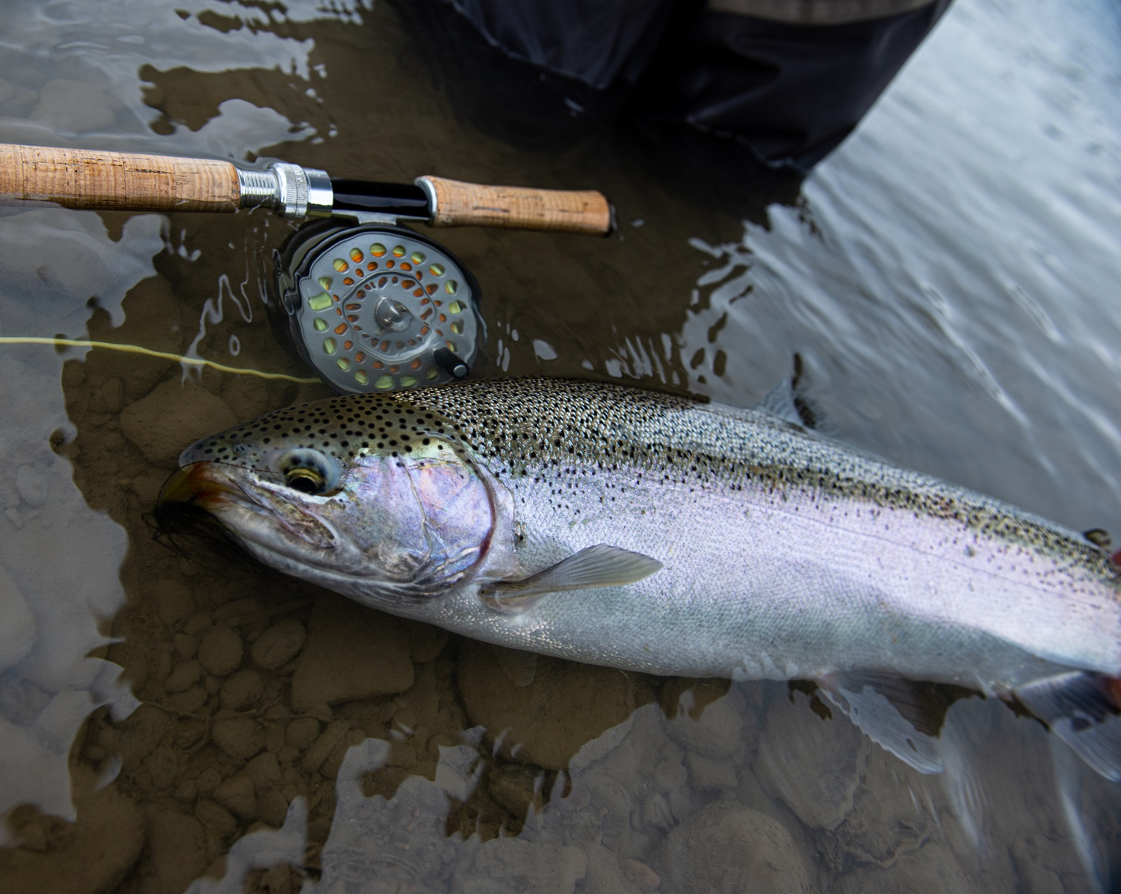 Webinar: Getting Ready for Great Lakes Spring Steelhead