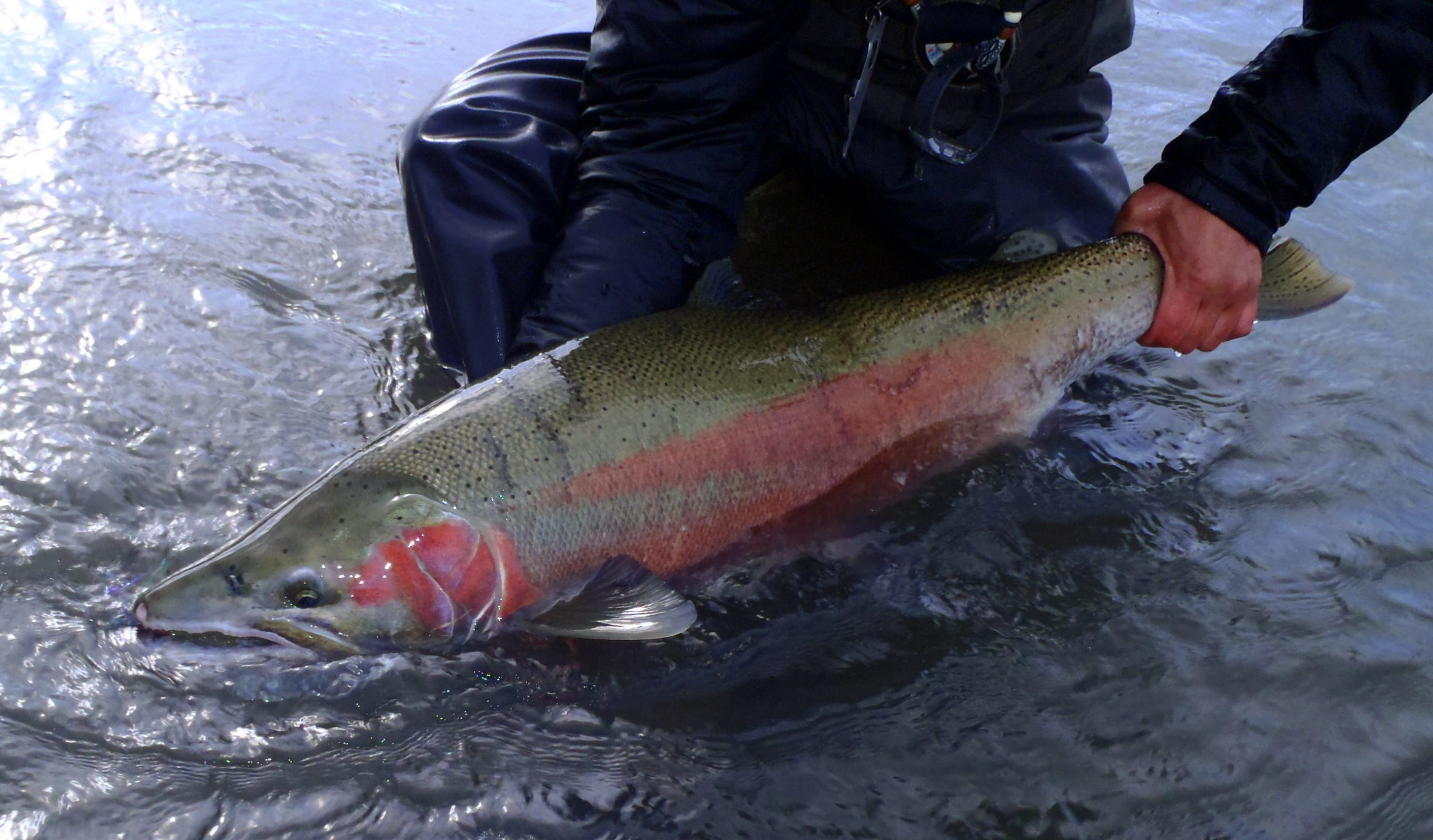 Winter Steelhead Rigging Seminar January 28!